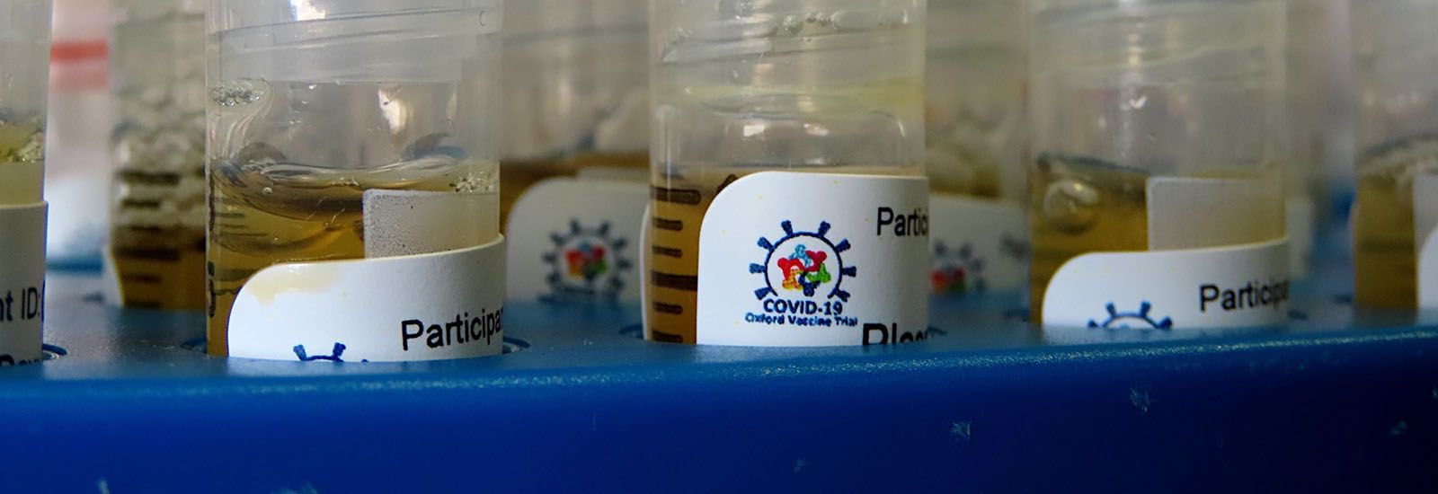 test tubes labelled with Covid-19 Oxford vaccine trial in a laboratory