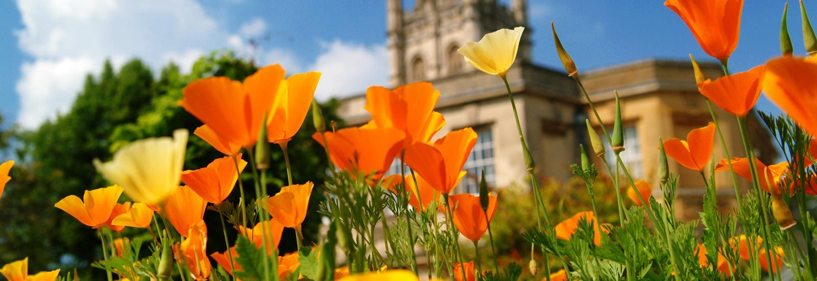 Botanic Garden and Magdalen Tower