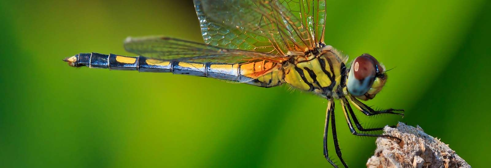 Macro picture of dragonfly in nature