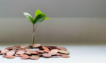 A green shoot grows from a pile of coins