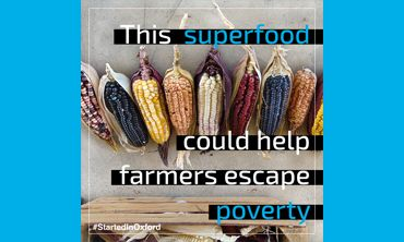 This superfood could help farmers escape poverty