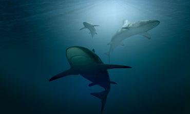 Image of sharks swimming in deep, dark ocean
