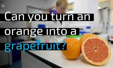 Can you turn an orange into a grapefruit?