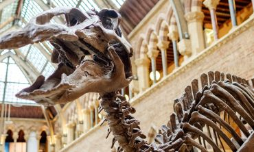 A dinosaur skeleton in the Natural History Museum