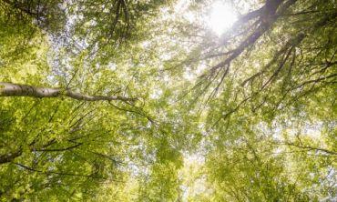 trees from a ground perspective. Credits: Anton Atanasov via Pexels