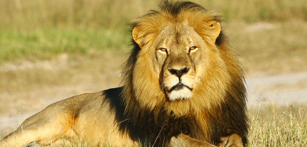 Cecil in Hwange National Park