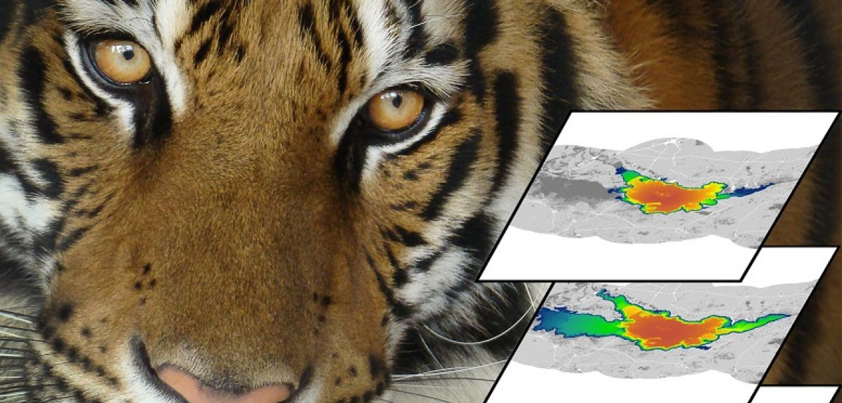 Tiger with example simulations