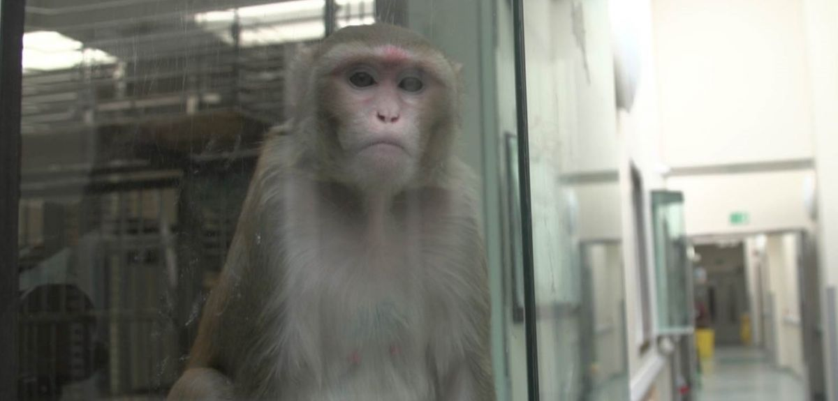 The new primate research programme will help with understanding of human brain function