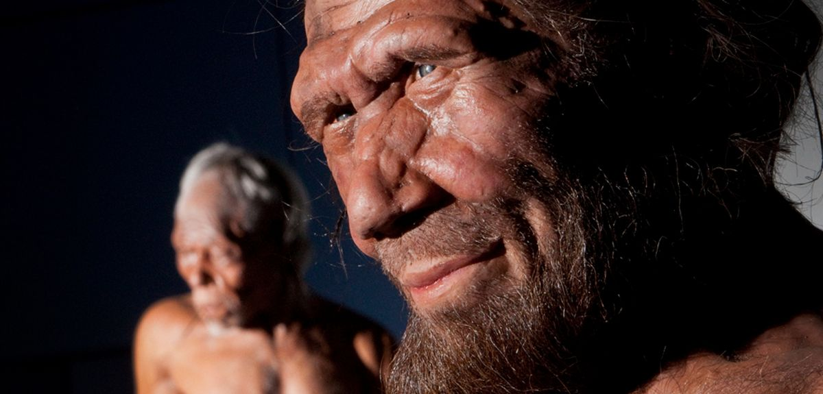 Model of Neanderthal from Natural History Museum, London, an institution that collaborated in the research.