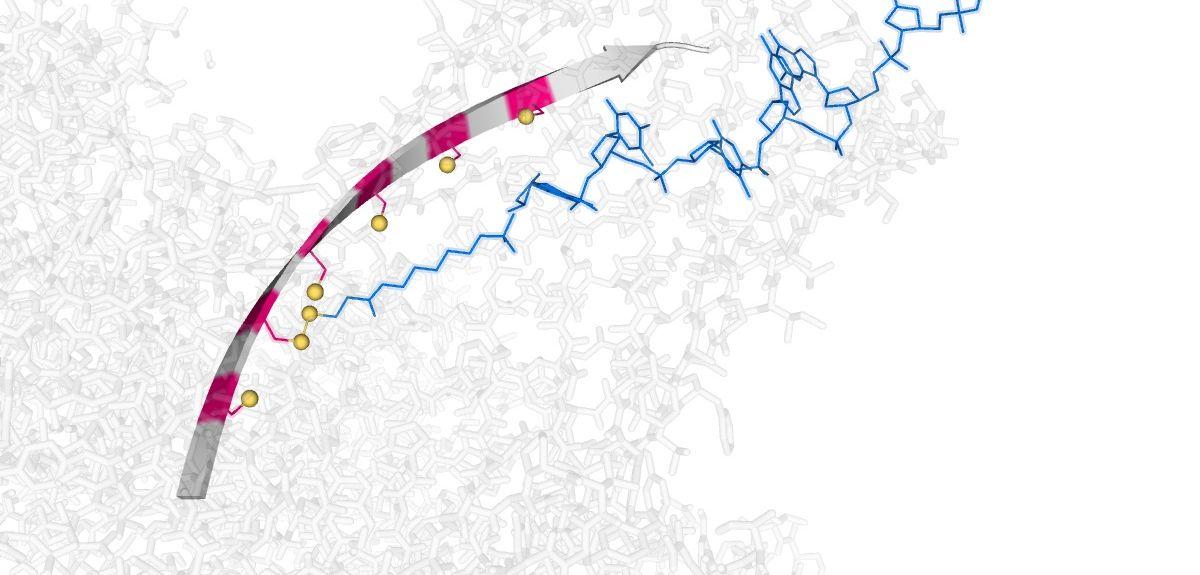 Molecular conveyor belt provides a foundation for nanoscale DNA-processing machines