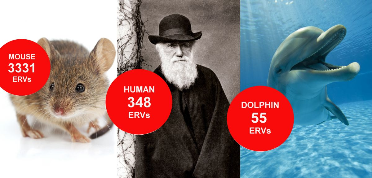 Larger animals have evolved to have fewer viral relics