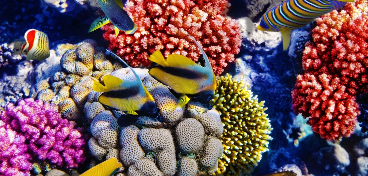 Habitats such as coral reefs support a huge diversity of plant and animal life, which students applying to study biological sciences might be asked to explain.