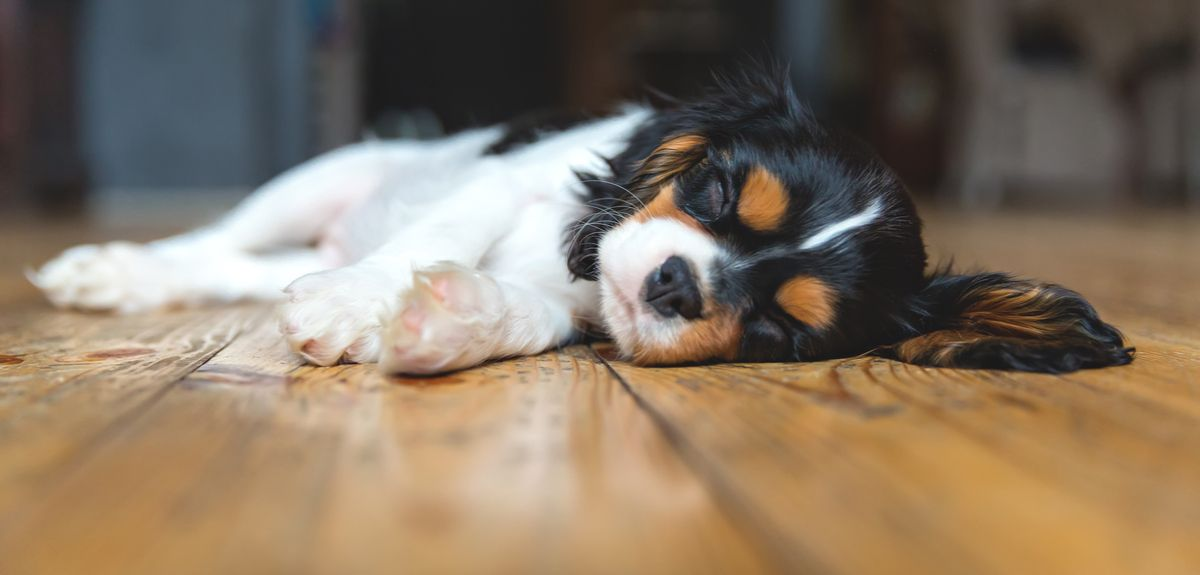 Finding the tipping point for sleep