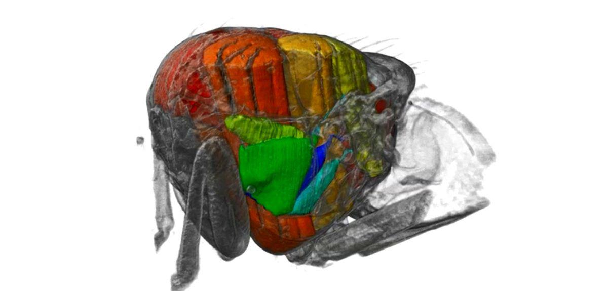 3D movie inside a fly