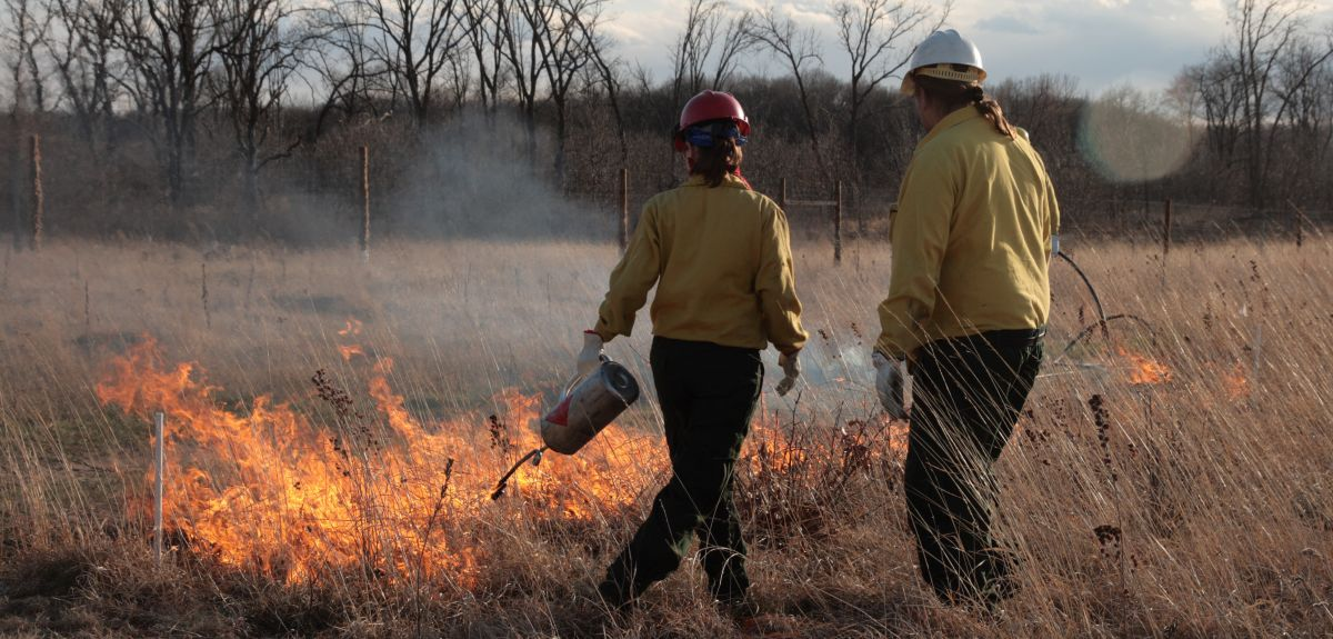 Controlled burns were used to simulate the impact of more frequent fires