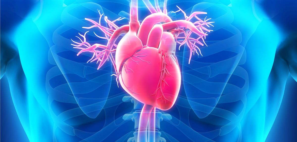 Antibody genes influence forgotten heart disease