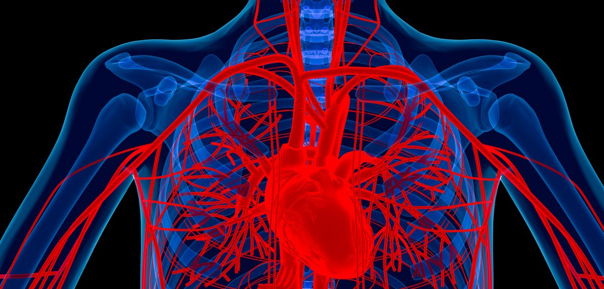 Research reveals link between high cholesterol levels and risk of aortic valve disease