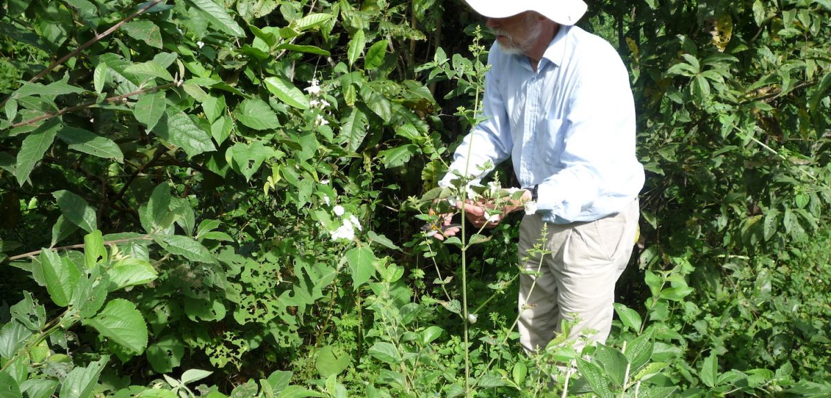 Taxing taxonomy: John Wood collecting plants in Bolivia