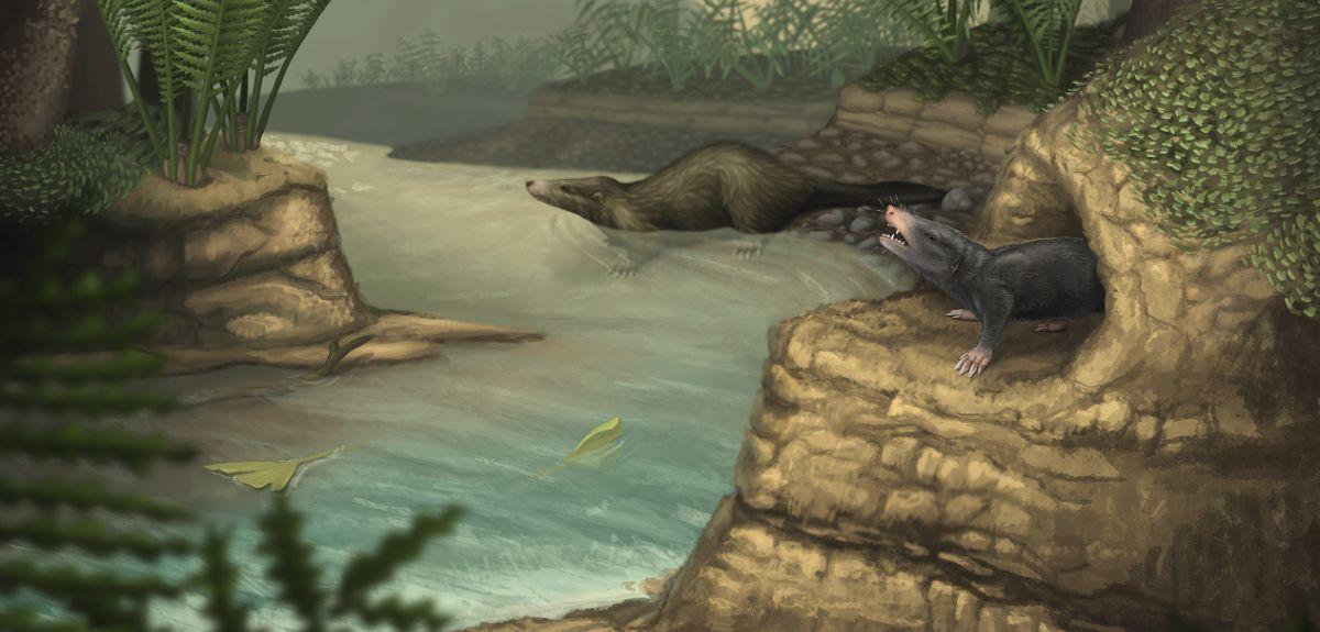 Illustration showing docodonts