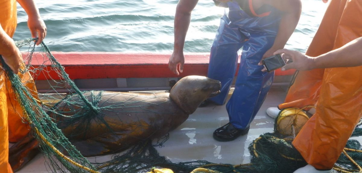 Sea lion operational interactions