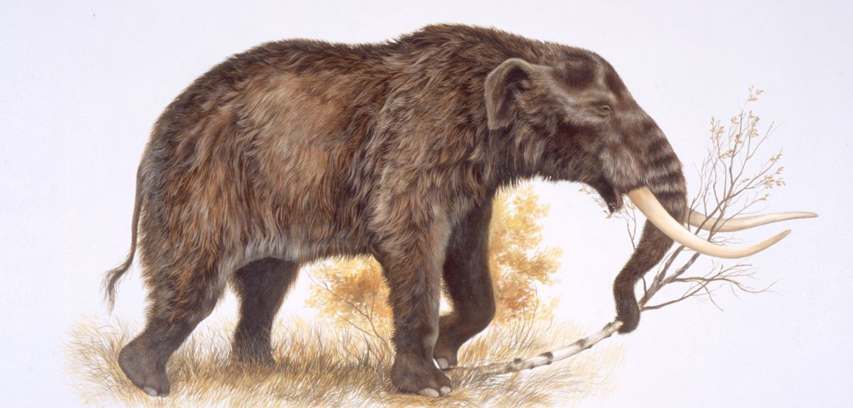 Illustration of American mastodon. Image courtesy of George Teichmann.