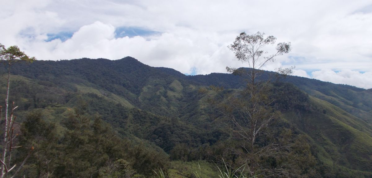 Montane rainforest in the Central Highlands of New Guinea.