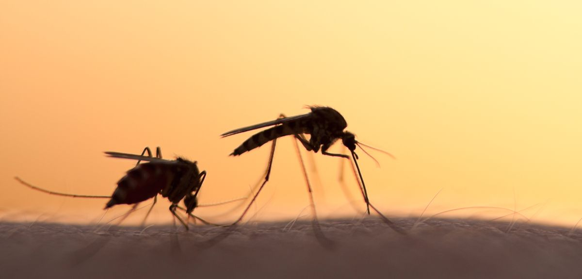 Modern housing associated with reduced malaria risk in sub-Saharan Africa