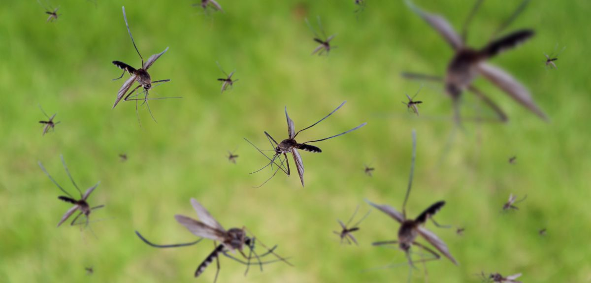 Many mosquitoes flying over field