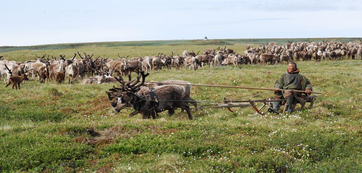 Nomadic reindeer herders in the Yamal-Nenets Autonomous Okrug of West Siberia.