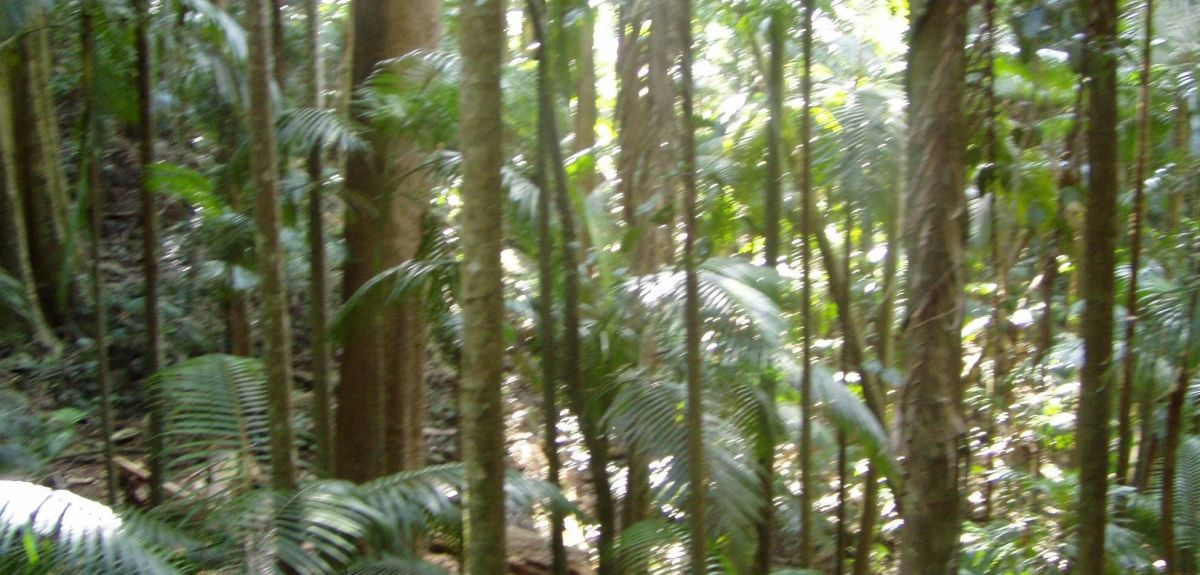 Fungi's role in 'policing' the rainforests has been revealed