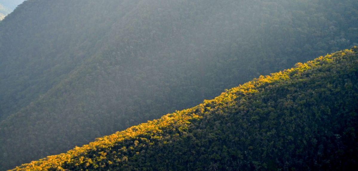 Tropical rain forests in Peru