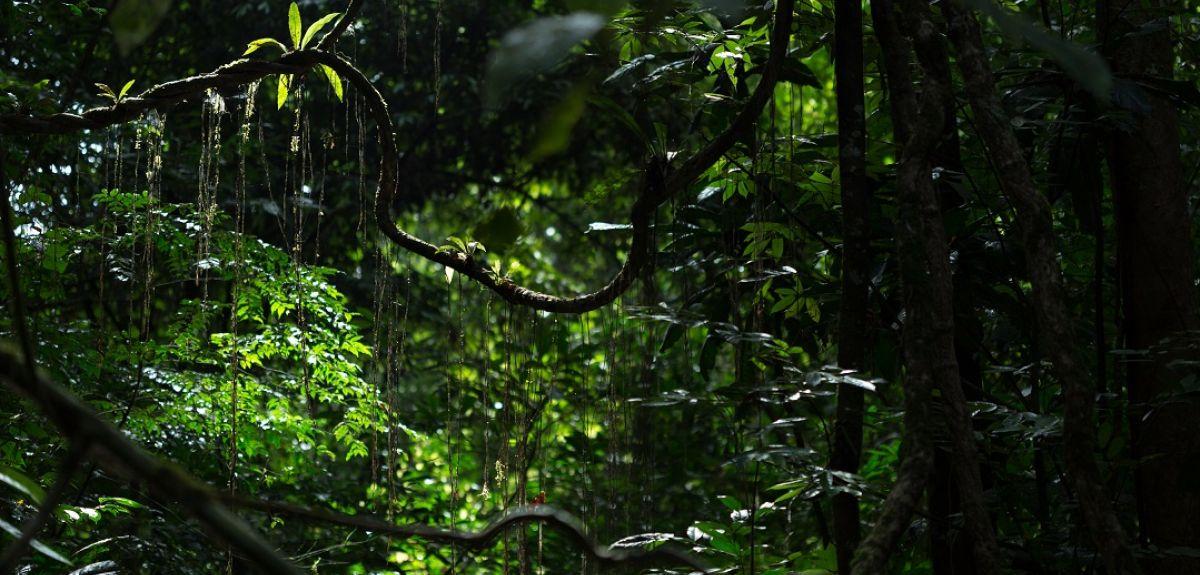 Tropical rainforest landscape in Ankasa national park, Ghana