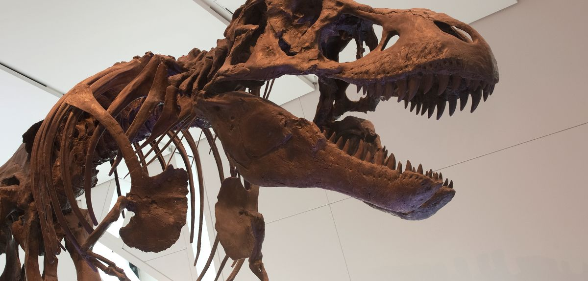 Tyrannosaurus rex weighed 7 tonnes and was the largest land predator of all time.