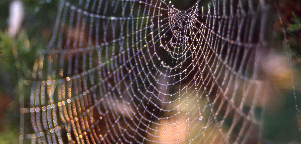 Web of Zygiella spider