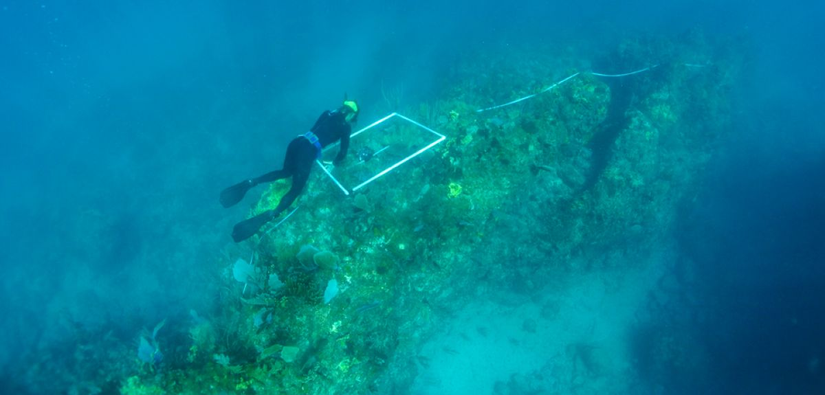 Surveying the reef for competitive interactions among organisms growing on hard surfaces