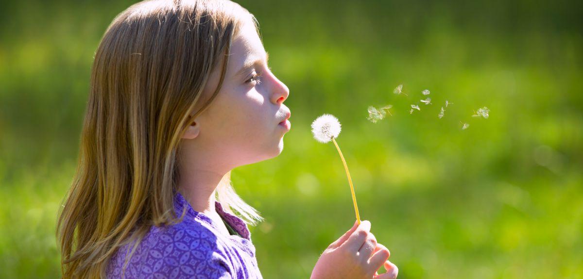 Child's breath: blowing on a dandelion