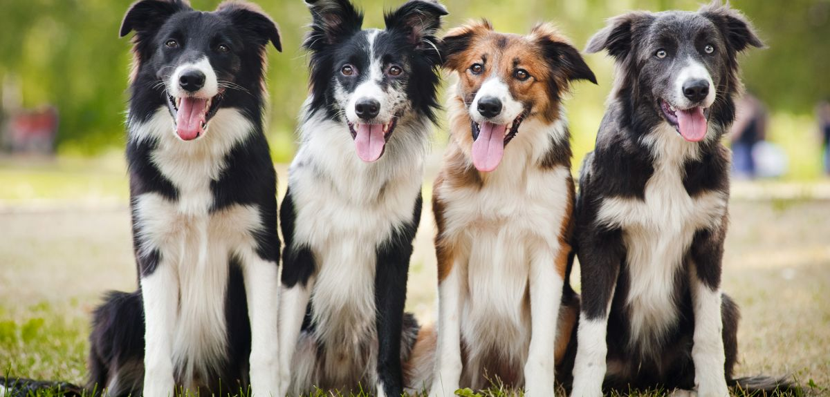 Dogs are man's oldest pet.