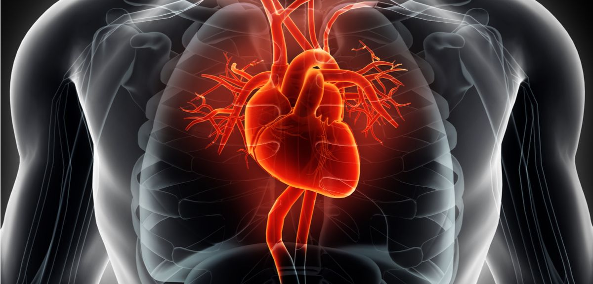 Mechanism of sudden heart deaths from impacts uncovered