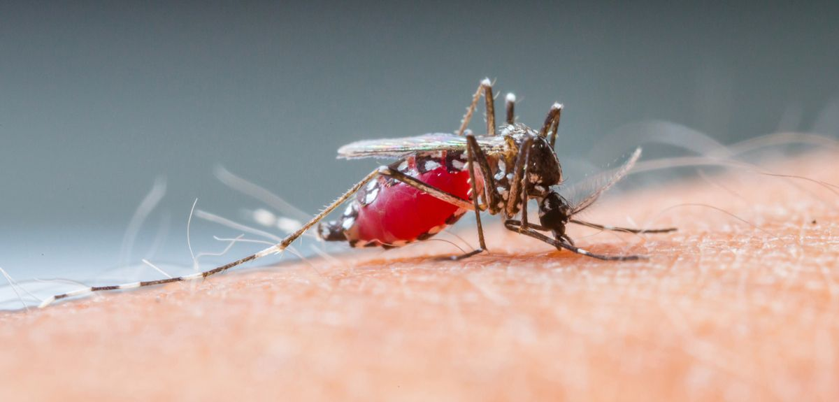 Drug resistant malaria spreading in South-East Asia