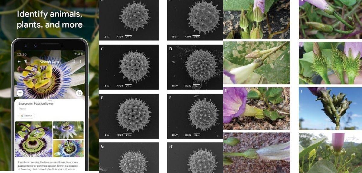 Taxonomy embraces new tech