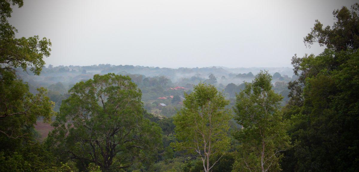 Seima Forest