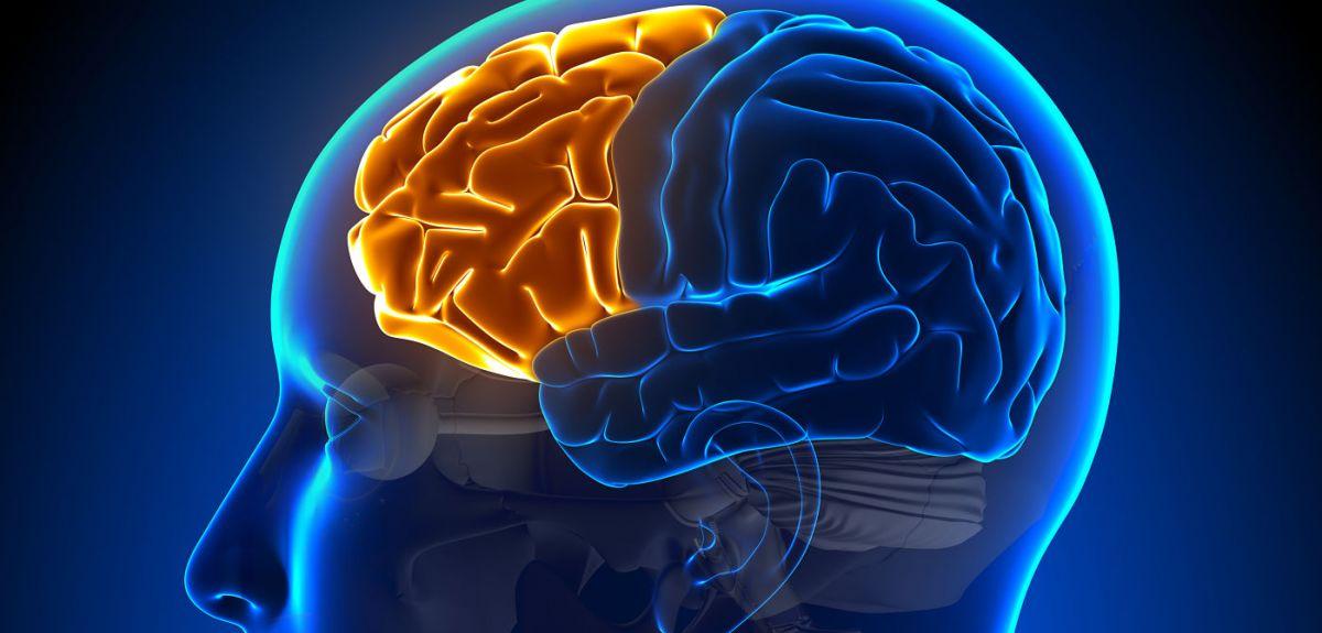 Frontal lobe area of the brain