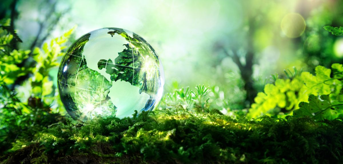 Clear globe on forest floor