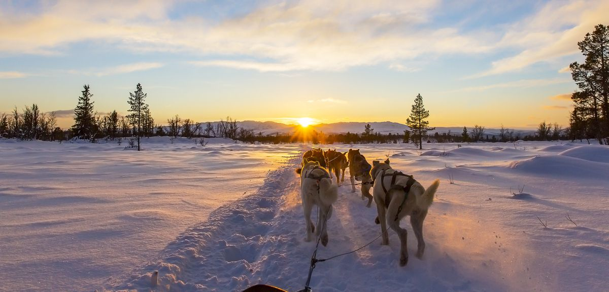 Dogs pulling sledge