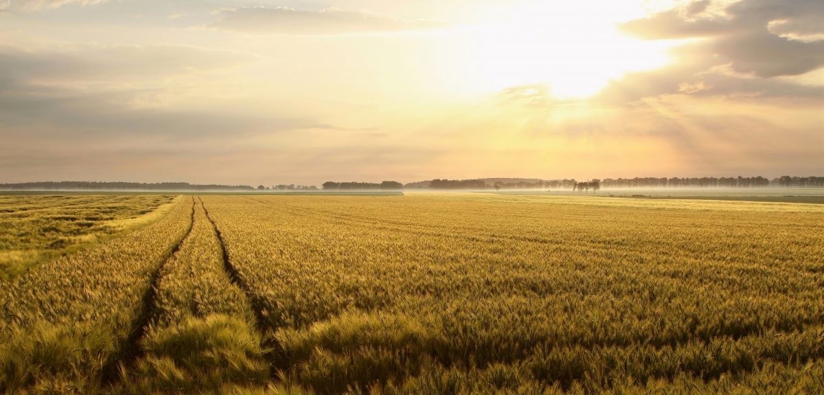 Climate change will effect crop productivity.
