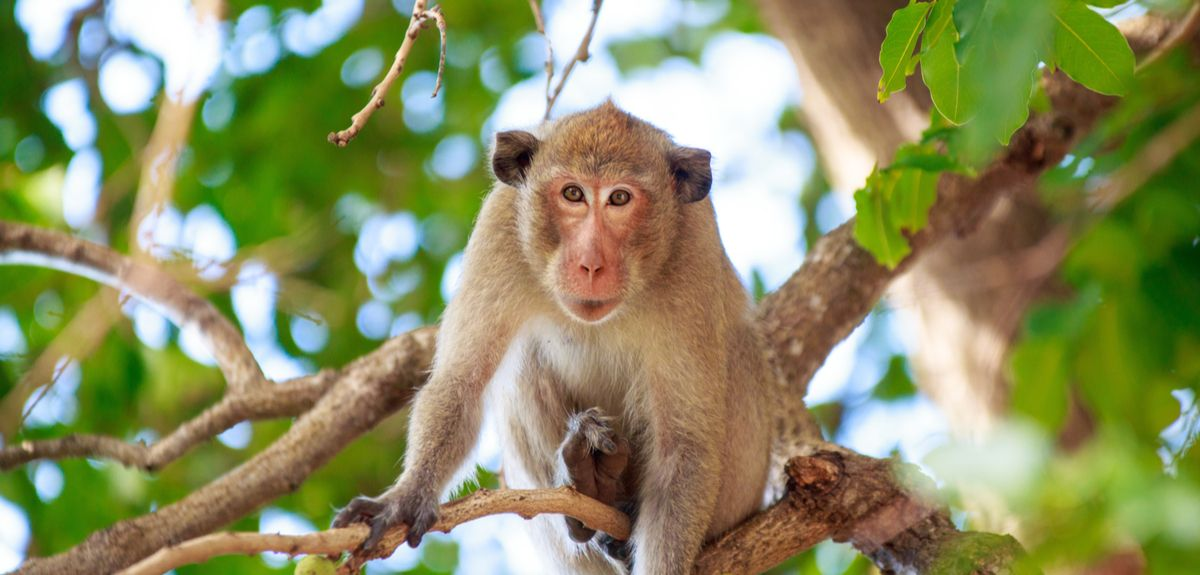 Findings in monkeys allow to get an understanding of what may happen in the human brain as well, in the case of fundamental behaviours that both species display