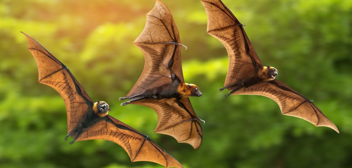 Three bats flying in front of green background