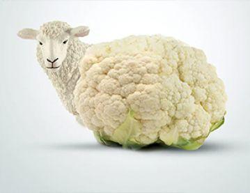 Lamb and cauliflower