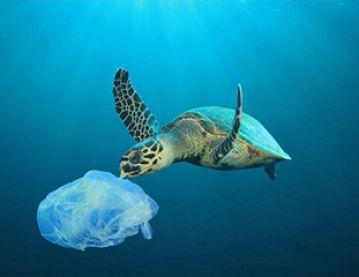 sea turtle and plastic
