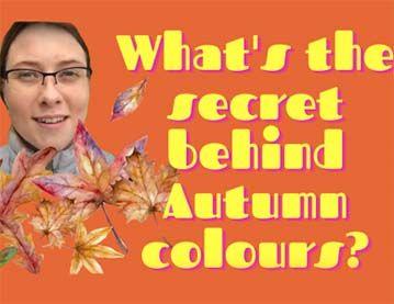 Lockdown Walks - What's the secret behind Autumn colours?
